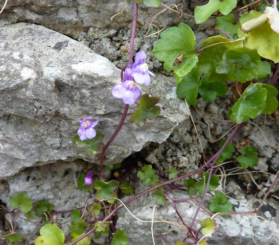 Bild 3 - (Biologie, Pflanzen, Natur)