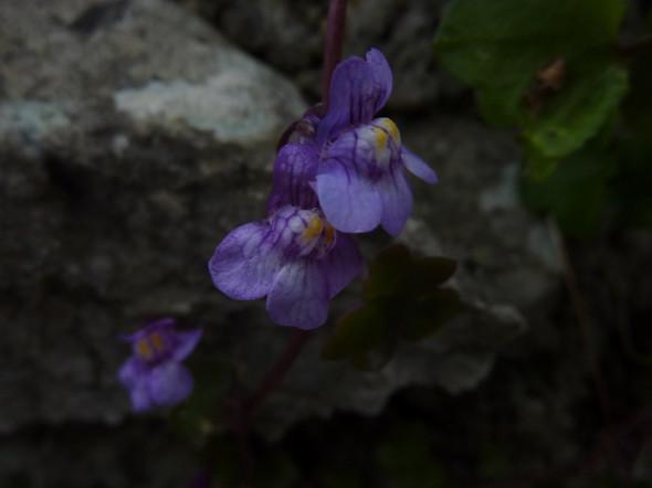 Nahaufnahme Blüte - (Biologie, Pflanzen, Natur)