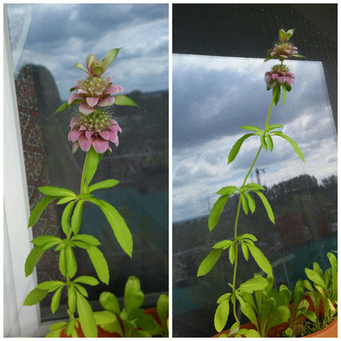 Hier die Pflanze. - (Pflanzen, Blumen, Gewächs)