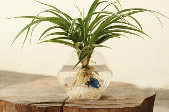 Welche Pflanzen kann ich in Wasser statt Erde halten (+Bild von Wasservase)? (Gärtnerei) ~ 01000848_Sukkulenten Ableger In Wasser