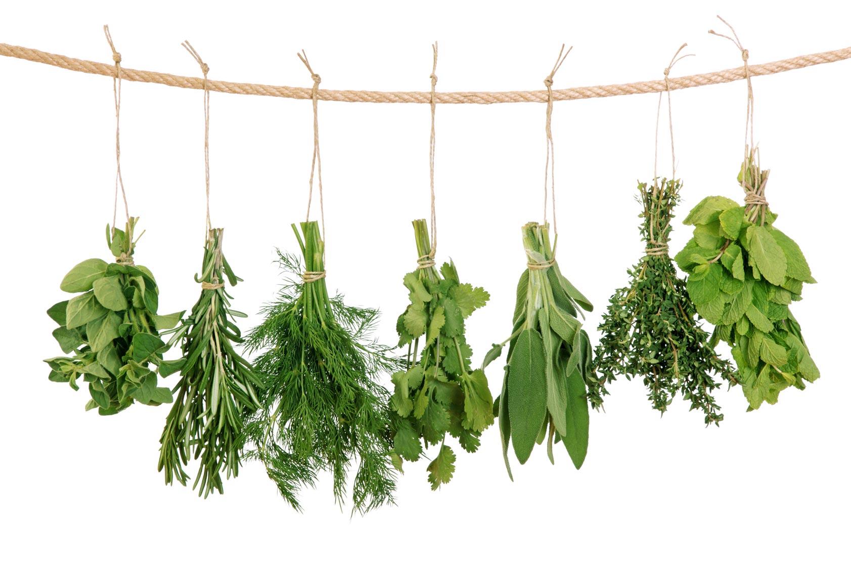 welche pflanzen sind auf den bild zu erkennen gesundheit garten kr uter. Black Bedroom Furniture Sets. Home Design Ideas