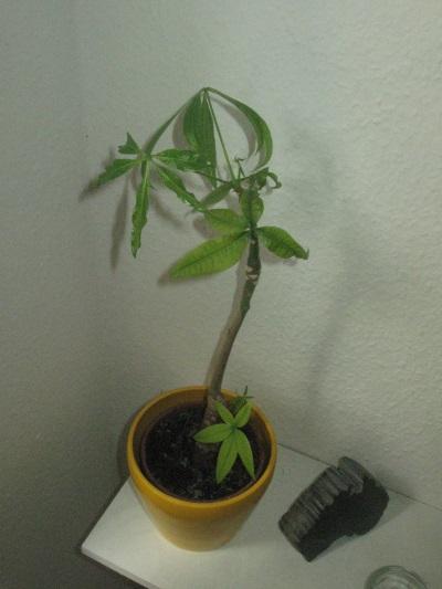 welche pflanzen sind das wie hei en sie pflanzenpflege. Black Bedroom Furniture Sets. Home Design Ideas