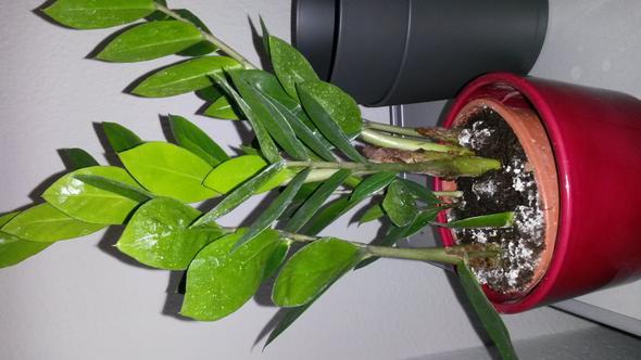 pflanze 2 - (Katzen, Pflanzen)