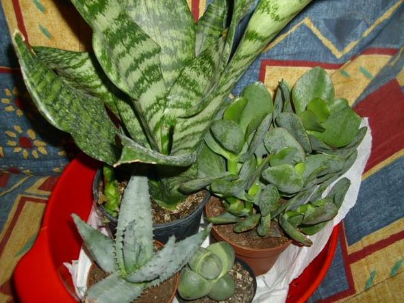 welche pflanzen sind diese hier f r bartagamen haustiere. Black Bedroom Furniture Sets. Home Design Ideas