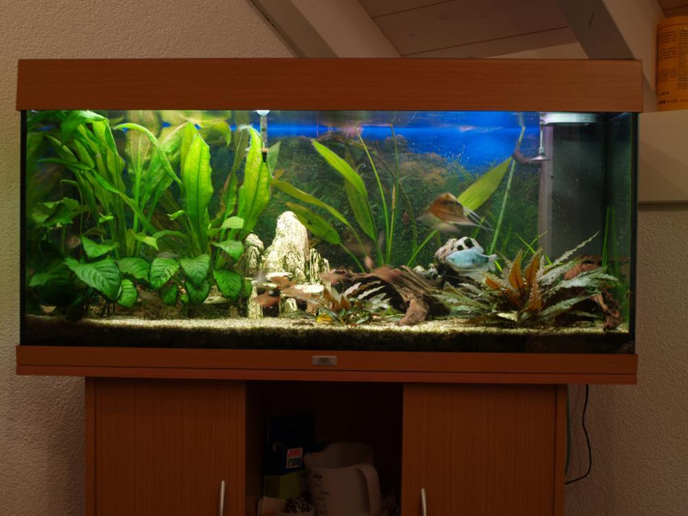 welche pflanzen w hlen fische aquarium unterwasserpflanzen. Black Bedroom Furniture Sets. Home Design Ideas