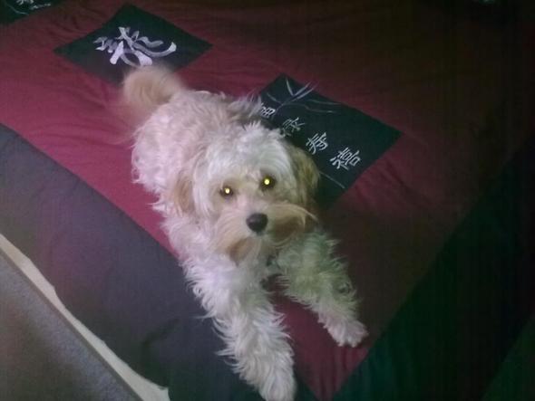 Bessie - (Hund)