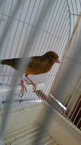 Vogel - (Vögel, klein, Rasse)