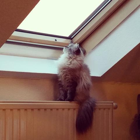 Katze 2 - (Katze, Haustiere, Katzen)
