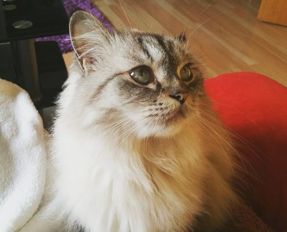Katze 3 - (Katze, Haustiere, Katzen)