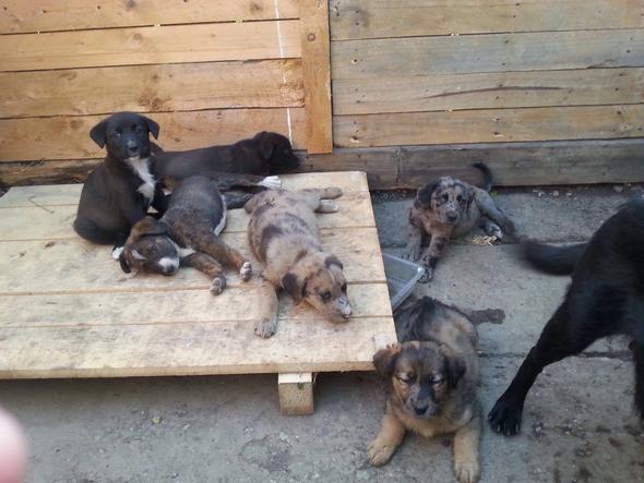 Seine Geschwister  - (Hund, Welpen, Hunderasse)