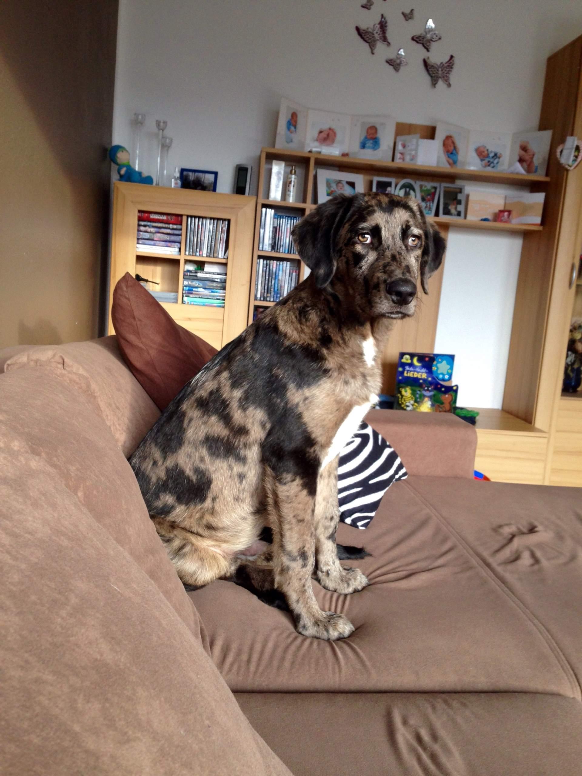 Welche Rasse könnte in meinem Welpen stecken? (Hund