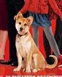 Hund im Film - (Tiere, Hund, Haustiere)