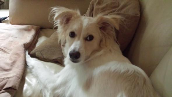 Holly - (Tiere, Hund)