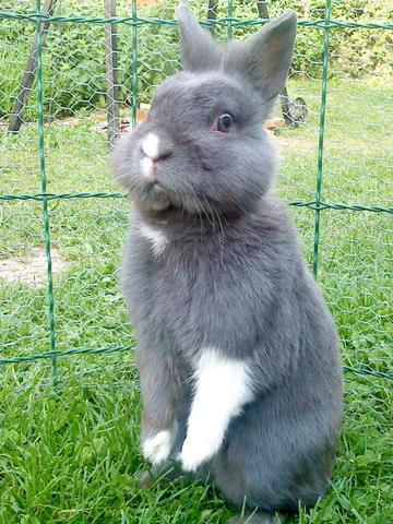 welche rassen sind meine kaninchen umfrage tiere hasen rasse. Black Bedroom Furniture Sets. Home Design Ideas