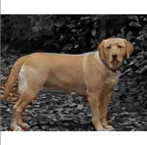 Welche Rassen stecken in meinem Hund, Bilder vorhanden?