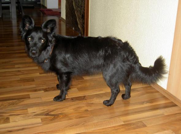 Mischling - (Hund, Rasse, Tierheim)