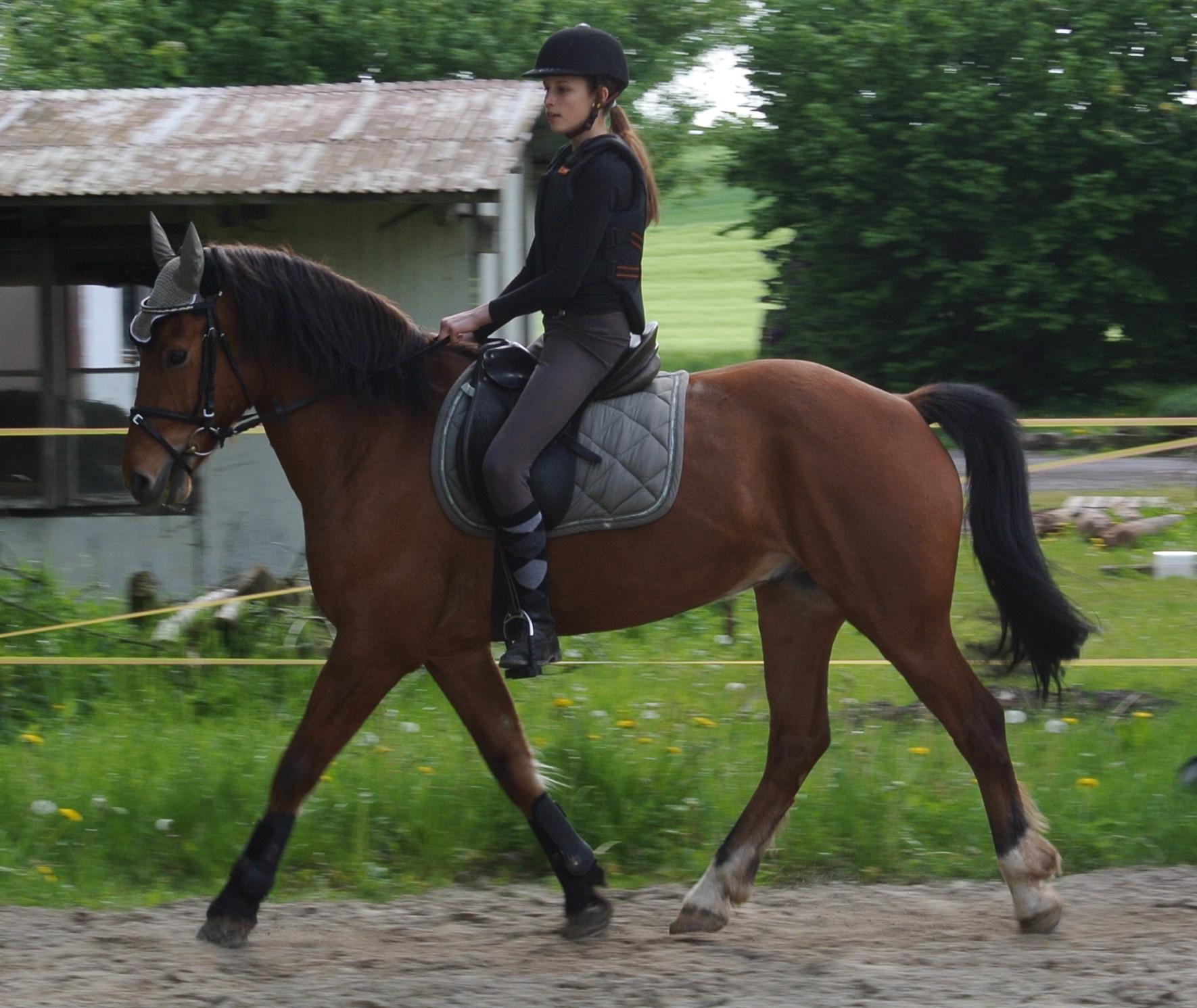 Welche Schabracken passen du diesen Pferden? (Pferde, Farbe, reiten)