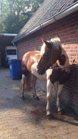 das ist mein kleiner schatz :D - (Pferde, reiten)