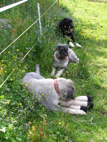 Die 3er Bande - (Tiere, Hund, Fellpflege)