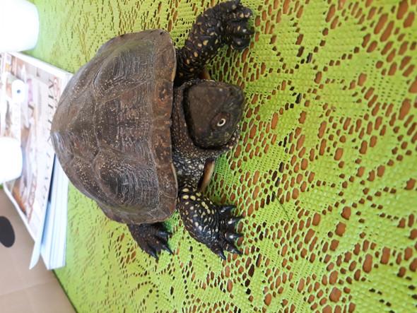 Kleiner Kühlschrank Für Schildkröten : Welche schildkrötenart ist das hier? schildkröten