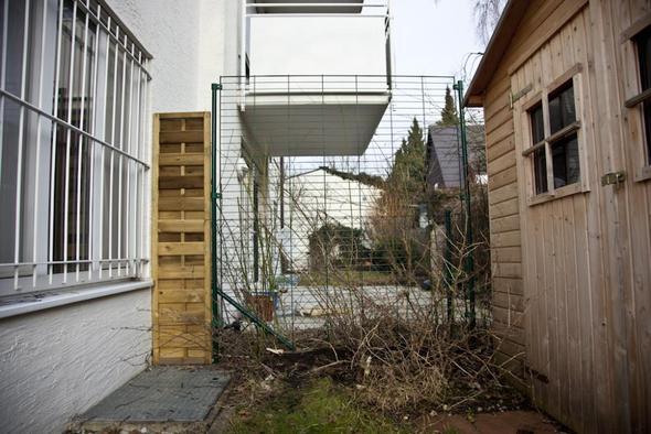 welche schnellwachsende dichte kletterpflanze f r zaun 1 75m x 2m geeignet sichtschutz garten. Black Bedroom Furniture Sets. Home Design Ideas