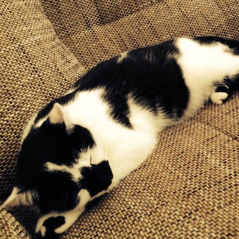 welche sch nen namen f r weibliche und m nnliche baby katzen gibt es haus katze name. Black Bedroom Furniture Sets. Home Design Ideas