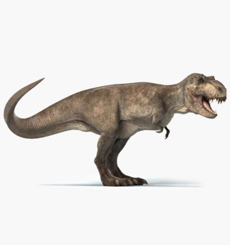 welche schuhgröße hättte ein t-rex gehabt? schuhe, dinosaurier