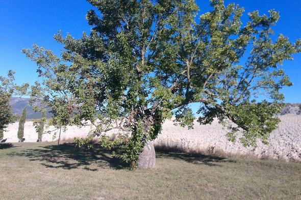 Der Baum - (Biologie, Frankreich, Baum)