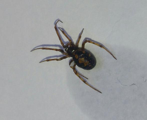 Bild 2 - (Tiere, Spinnen, Spinne)
