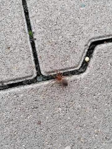 Welche Spinne ist das?Sie war in einer Lieferung?
