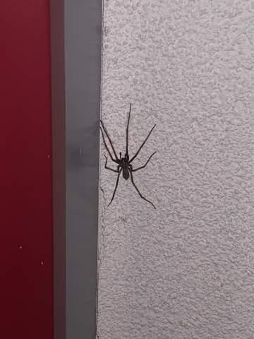 Welche Spinne ist vor meinem Haus (Österreich)?