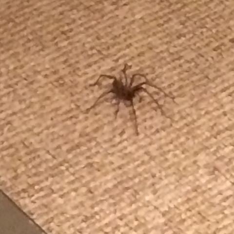 Welche Art von Spinne? - (Spinnen, Spinne, Spinnenart)