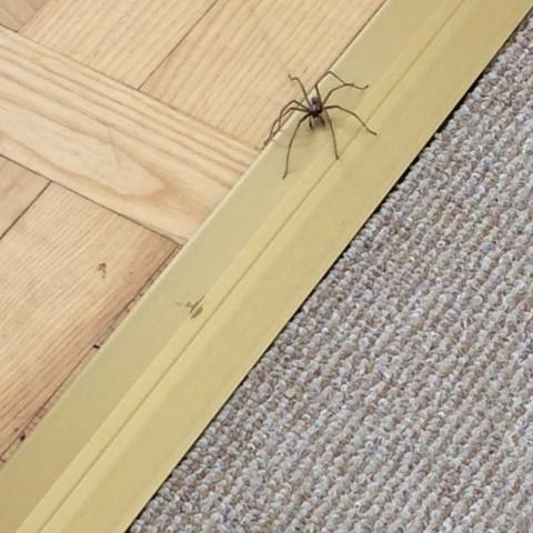Wie heißen die beiden? - (Spinnen, Spinne, Spinnenart)