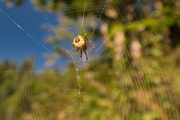 Welche Spinnenart?