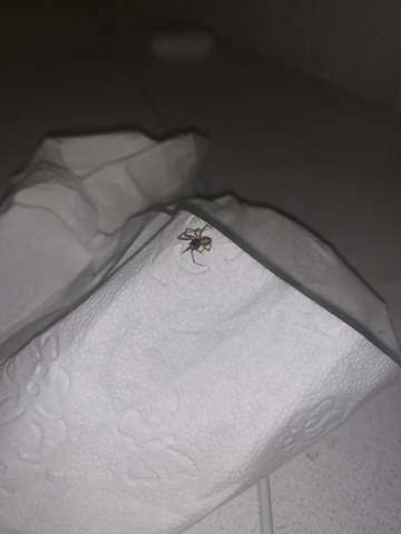 Welche Spinnenart ist daas?