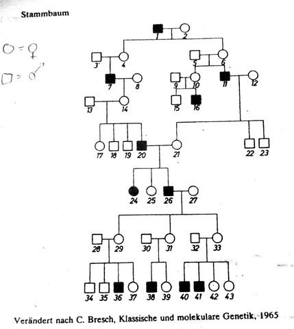 Unbeschrifteter Stammbaum - (Schule, Arbeit, Medizin)