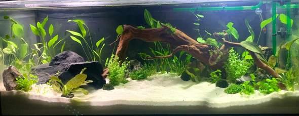 Welche Tiere in mein Aquarium?
