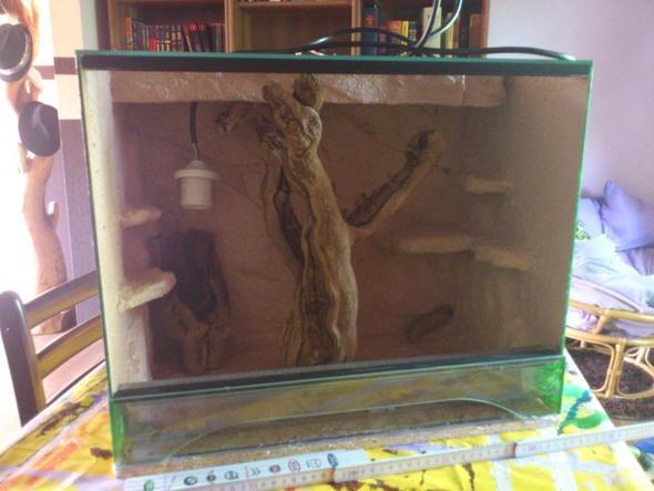 Das Holz steht nur lose drinne - (Tiere, Terrarium, Reptilien)