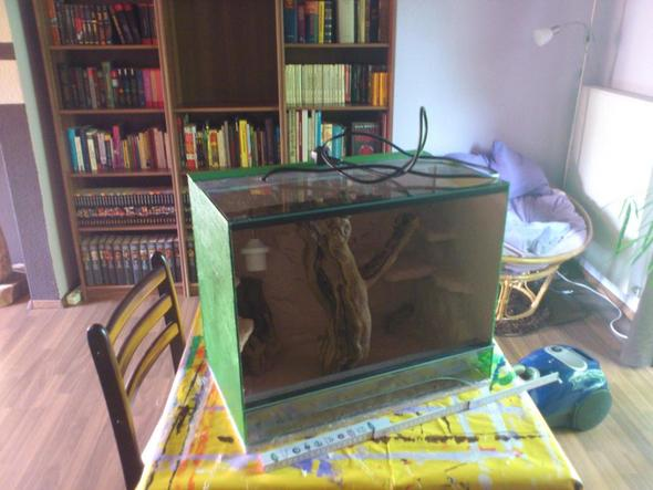 Das Terrarium soll den Platz da hinten im Bücherregal bekommen - (Tiere, Terrarium, Reptilien)