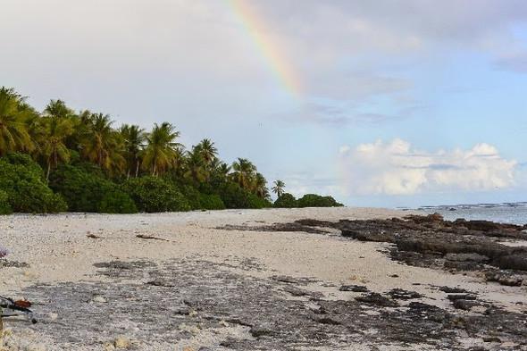 Welche Vegetation und welche Tiere gibt es auf Nikumaroro?