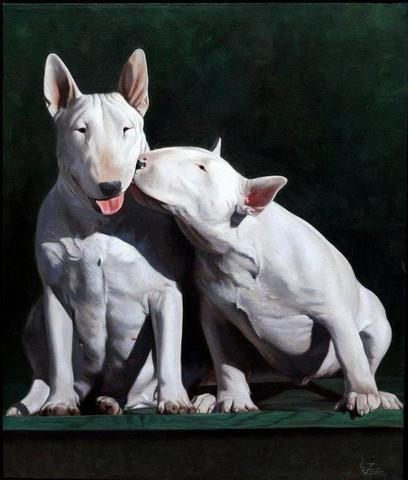 english bullterrier - (Liebe, Tiere, Hund)