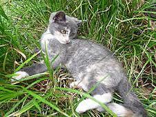 1 Katze  - (Namen, Warrior Cats)