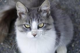 2 Katze  - (Namen, Warrior Cats)