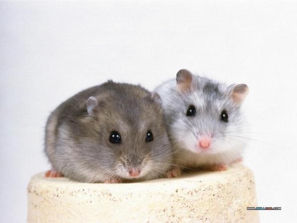 Google Bild :P - (Zähne, Hamster)