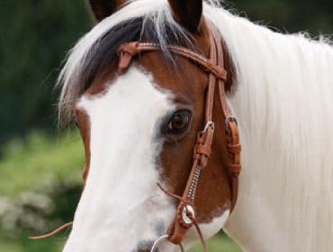 Bei Krämer gekauft - (Pferde)
