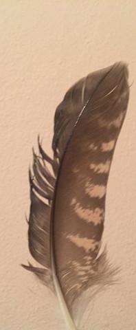 Die Feder - (Vögel, Art)