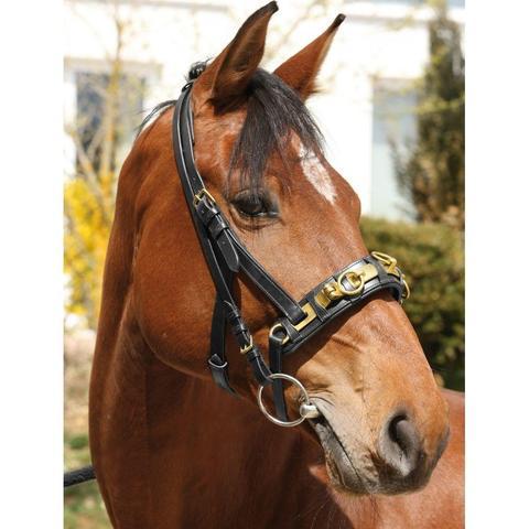 Welchen Kappzaum Kaufen Pferde Longieren