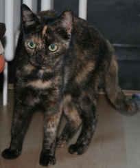 - (Katze, Haustiere, Namenssuche)