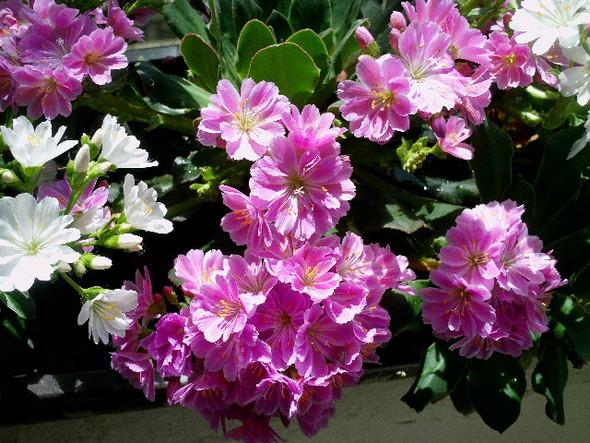 Pflanzen Im Mai : welchen namen hat diese im mai bl hende pflanze auf den bildern garten pflanzen blumen ~ Buech-reservation.com Haus und Dekorationen