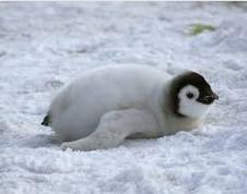 Welchen Pinguin findet ihr am süßesten?